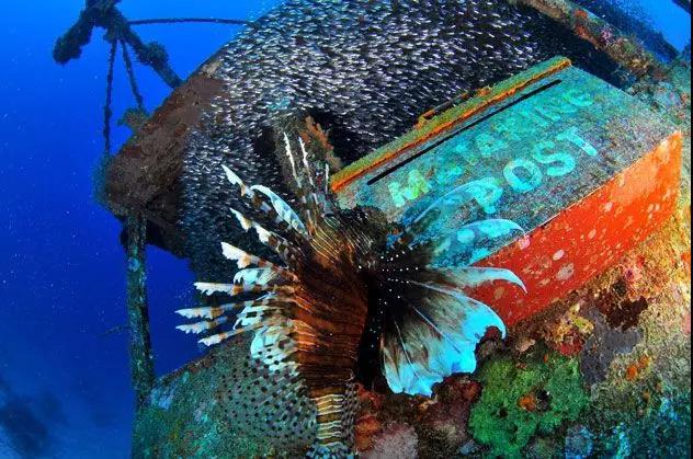 仙本那潜水攻略 | 诗巴丹、马布岛、马达京、卡帕莱......总有一个你喜欢!