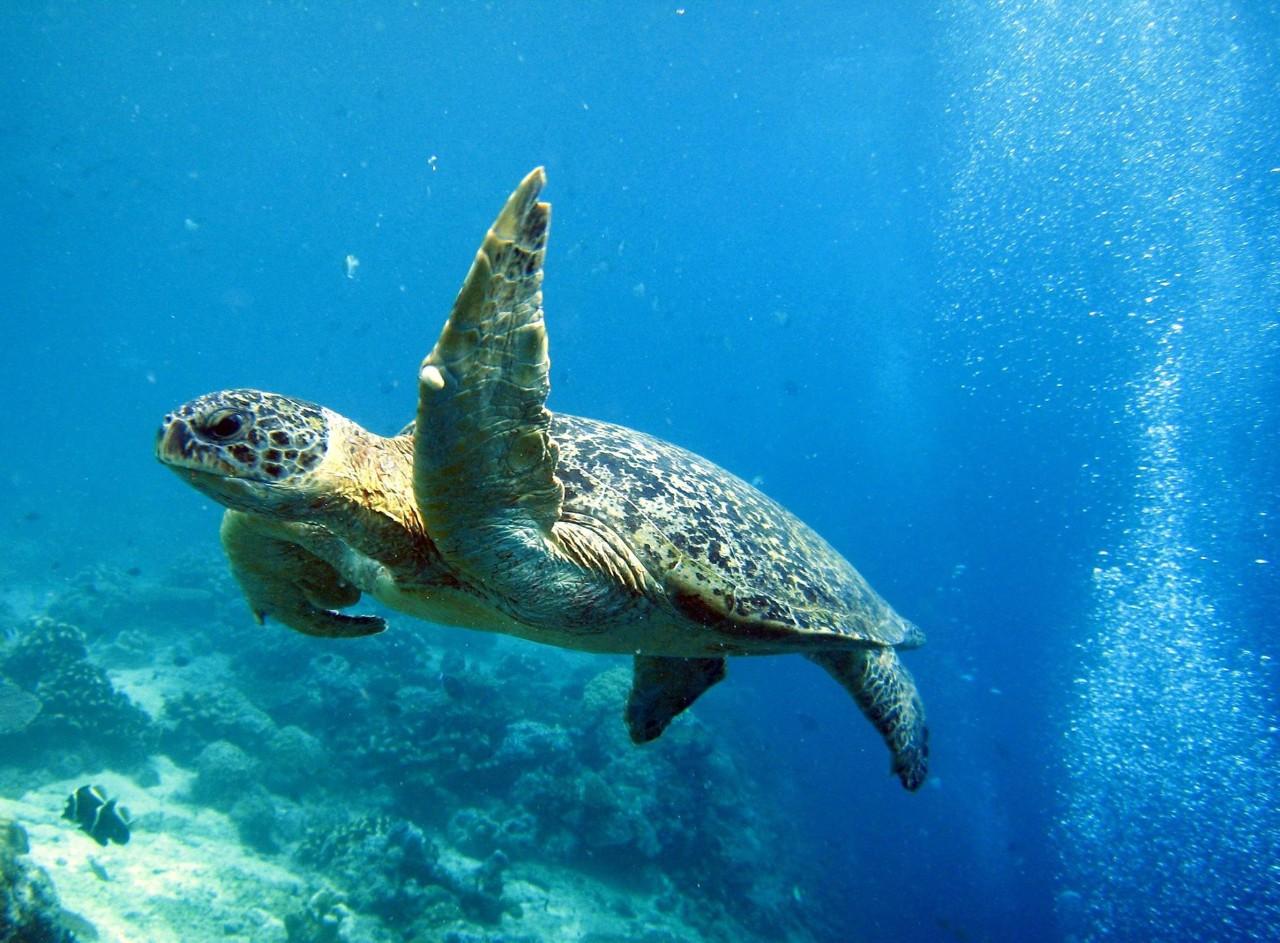 诗巴丹旅游攻略 | 诗巴丹岛Sipadan潜水,著名潜点、诗巴丹名额、诗巴丹住宿、潜水考证,全部解决!