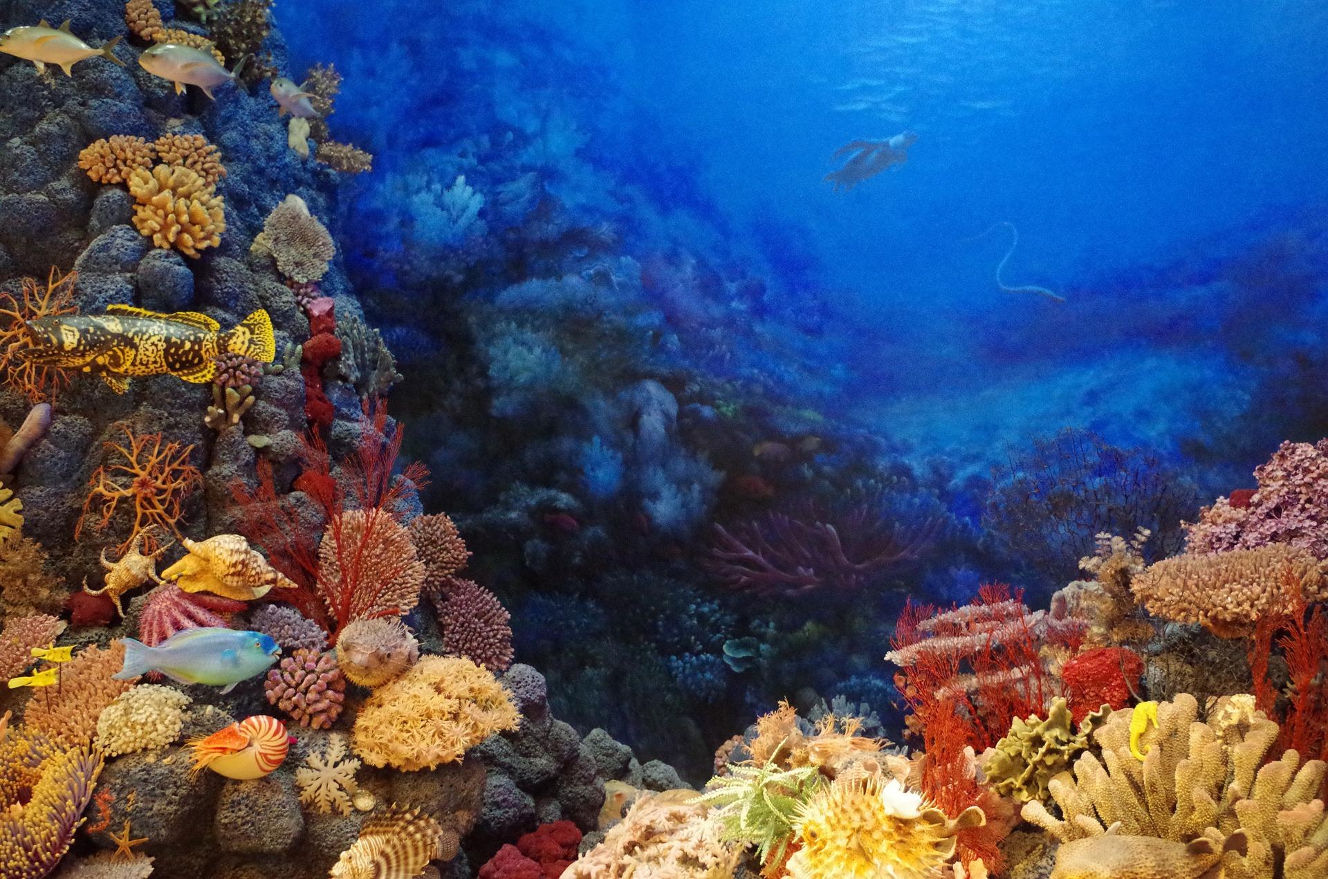 关于潜水你不得不知道的潜在危险