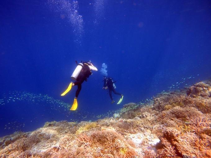 潜水证是如何和潜水小白搭上联系的