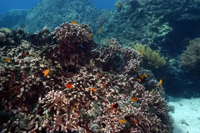 潜水世界 | 扎心了老铁,原来潜水看到的所有的Nemo小丑鱼都是男性!