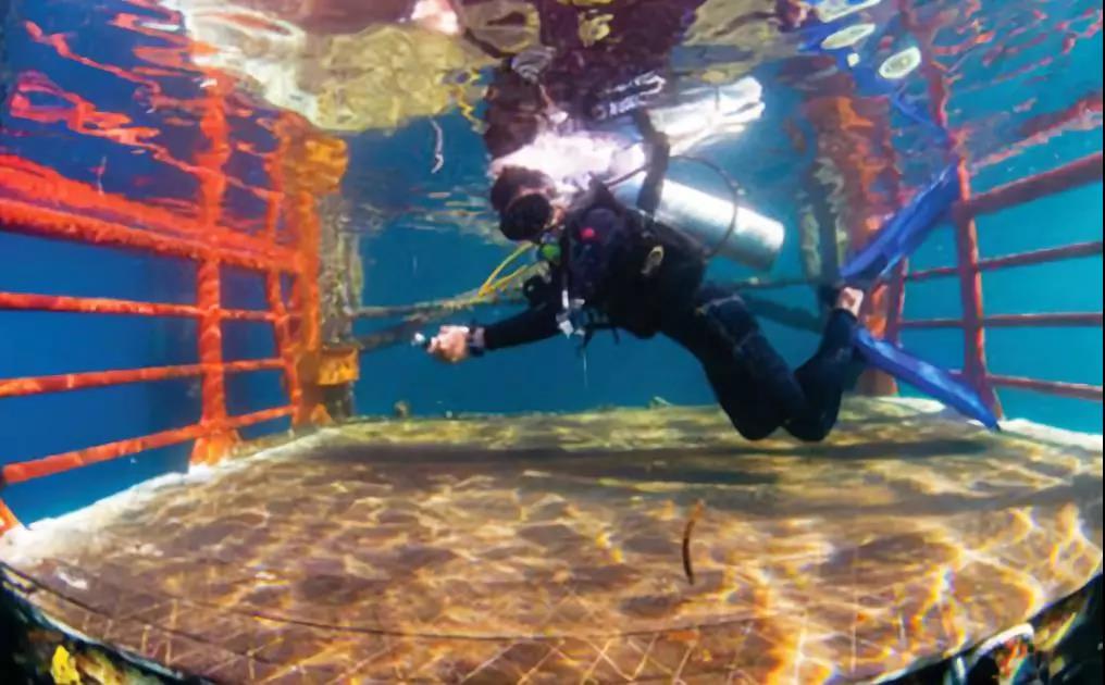 马布平台潜水攻略|体验独一无二的潜水旅,拥抱缤纷的诗巴丹!