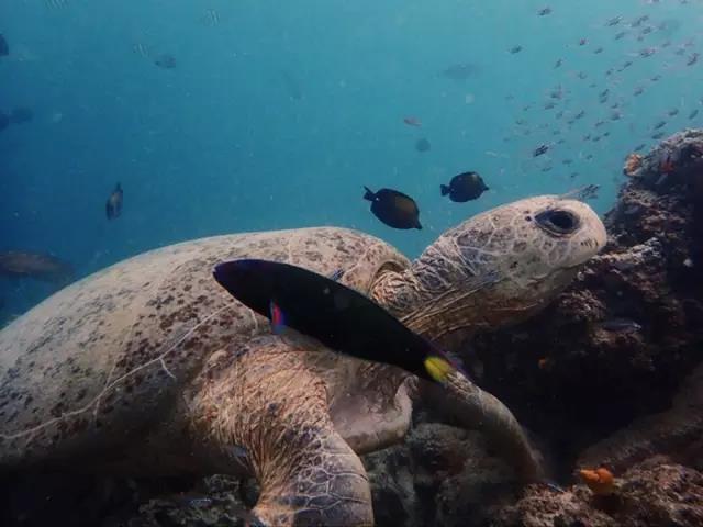 马来西亚拼假攻略 | 醉美沙巴州、潜水、蜜月、亲子游,长假短假出游同样尽兴!
