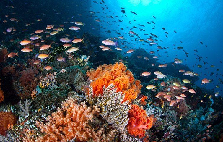 潜水攻略 | 这里是前段时间大火的前任3拍摄地,这里是潜水界的麦加——美娜多!