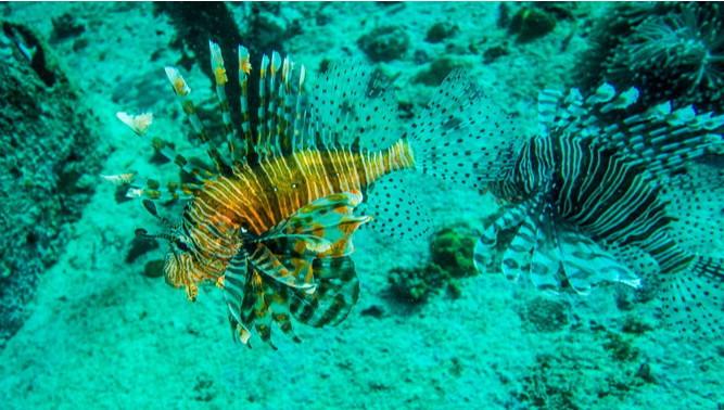 仙本那潜水免费|仙本那最适合新手的潜水点——军舰岛!免费体验潜水大赠送!
