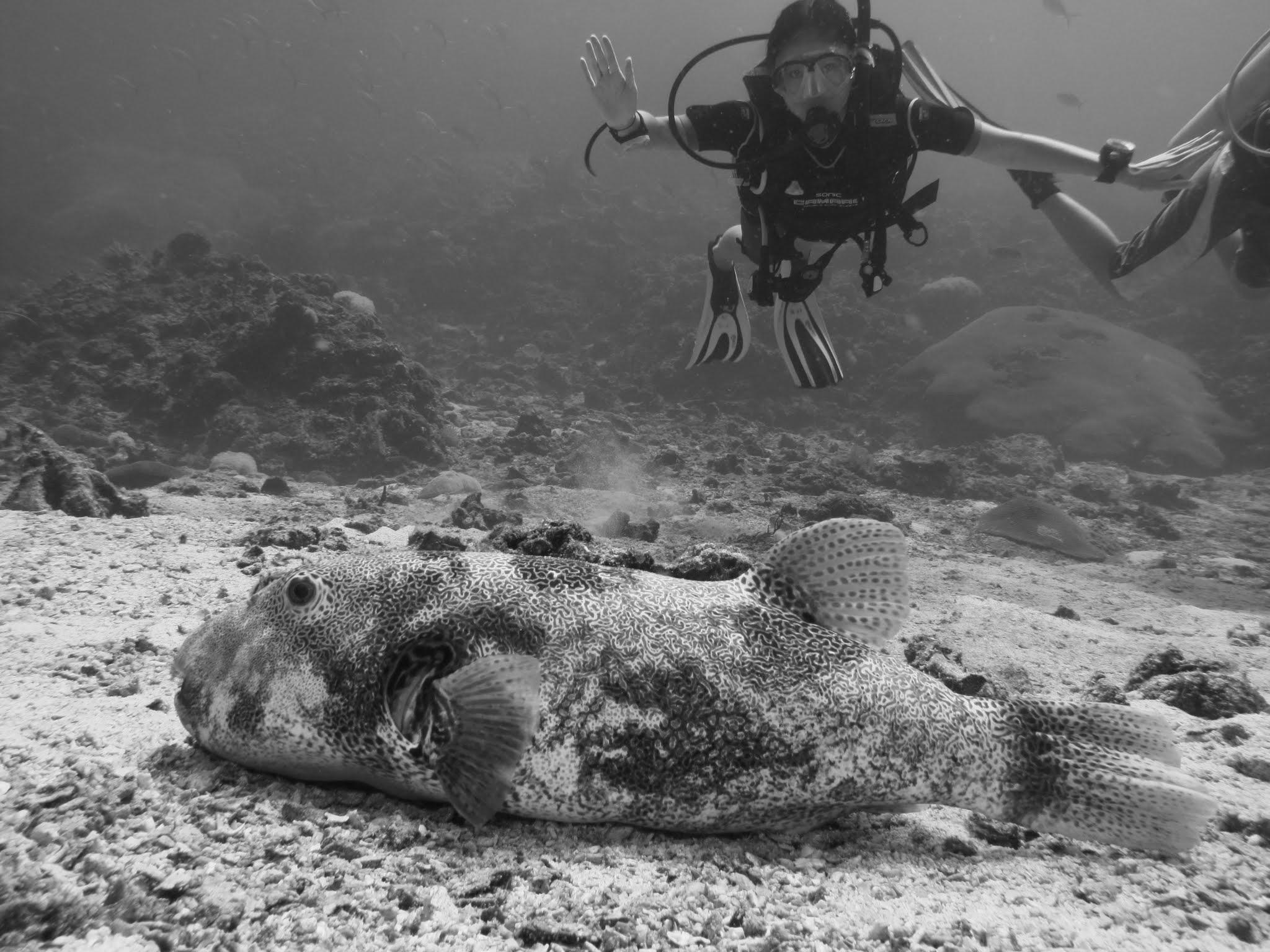 人物专访|女潜水员:热爱潜水,是因为热爱海洋也敬畏大海!