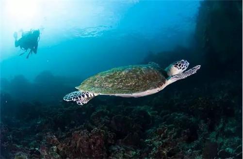 来世界潜水员工厂考潜水证吧!涛岛潜水考证全攻略!考潜水证性价比最高!
