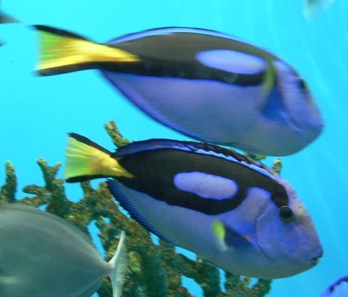 巴厘岛潜水指南|图蓝本潜点介绍,除了沉船,它更令人惊喜!