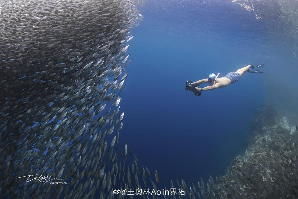 想变成美人鱼在海里自由遨游!AIDI、PADI、SSI哪家的自由潜水有这种魔力?