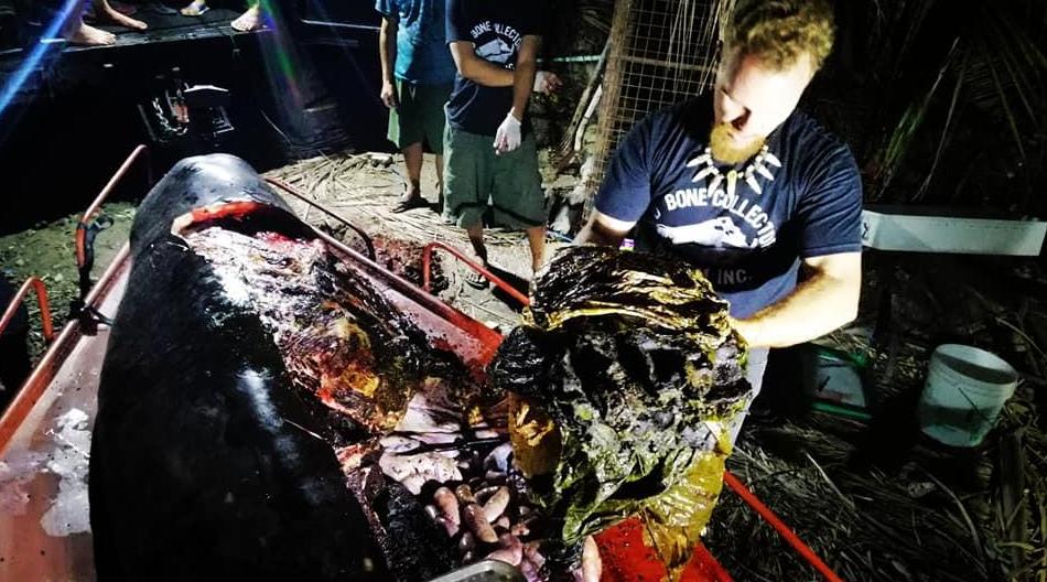 """佟丽娅身穿""""垃圾""""裙上热搜,可鲸鱼胃有40公斤塑料袋…"""