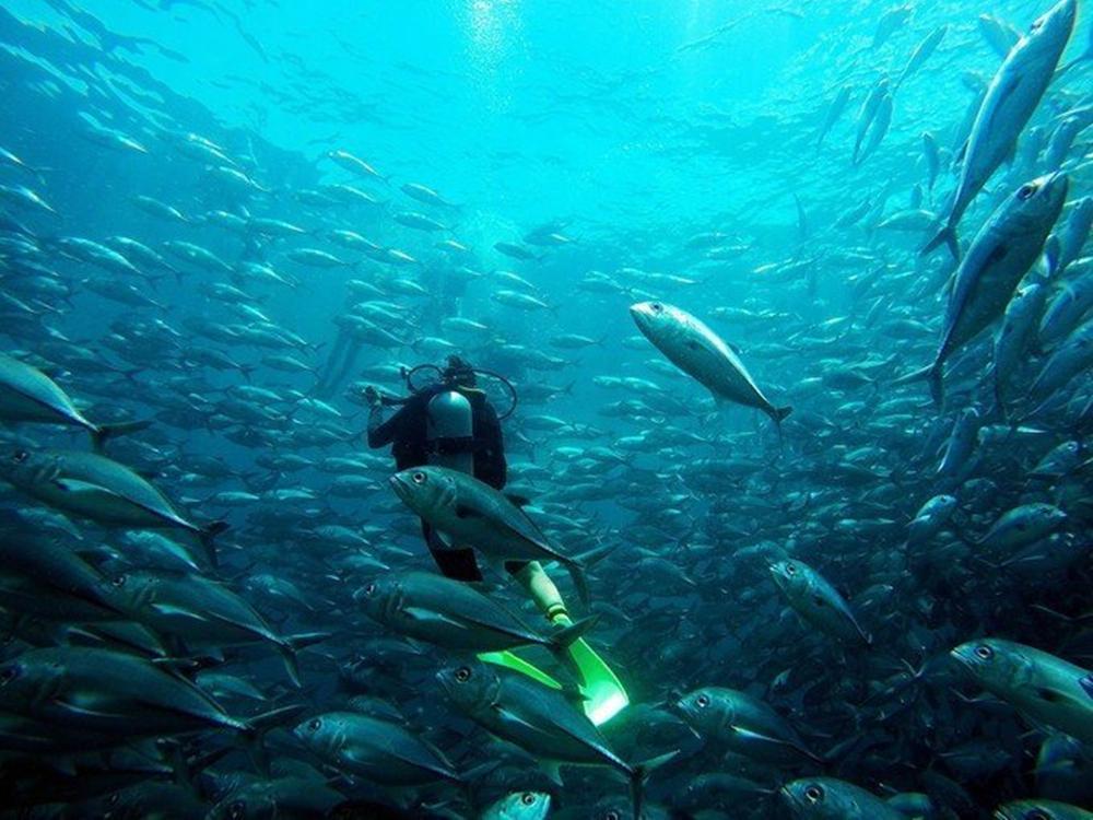 一分钟攻略|教你如何快速获得诗巴丹潜水名额