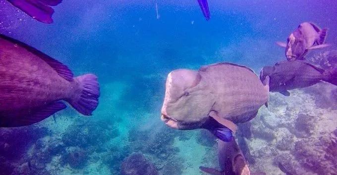 """上帝打翻的水族馆!来潜水过的人一生都染上""""蓝毒""""!"""
