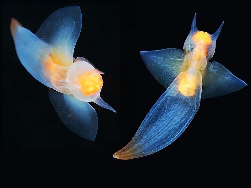 从岁月静好到暴力美学,这8种奇特海洋生物,你可能一个都没有见过