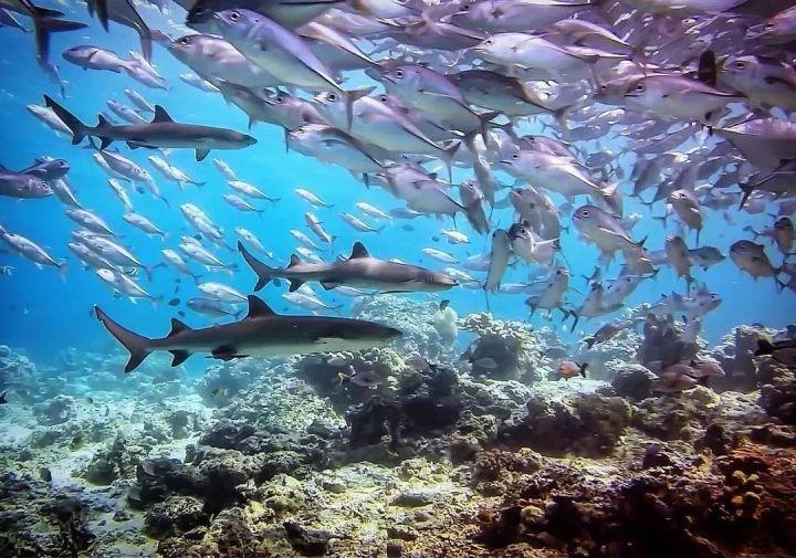 不用去3W+的马尔代夫,仅需5K你也能拥有绝美海景