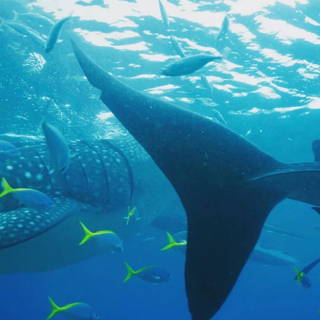东南亚最全的潜水考证攻略!带你全方位认识潜水!