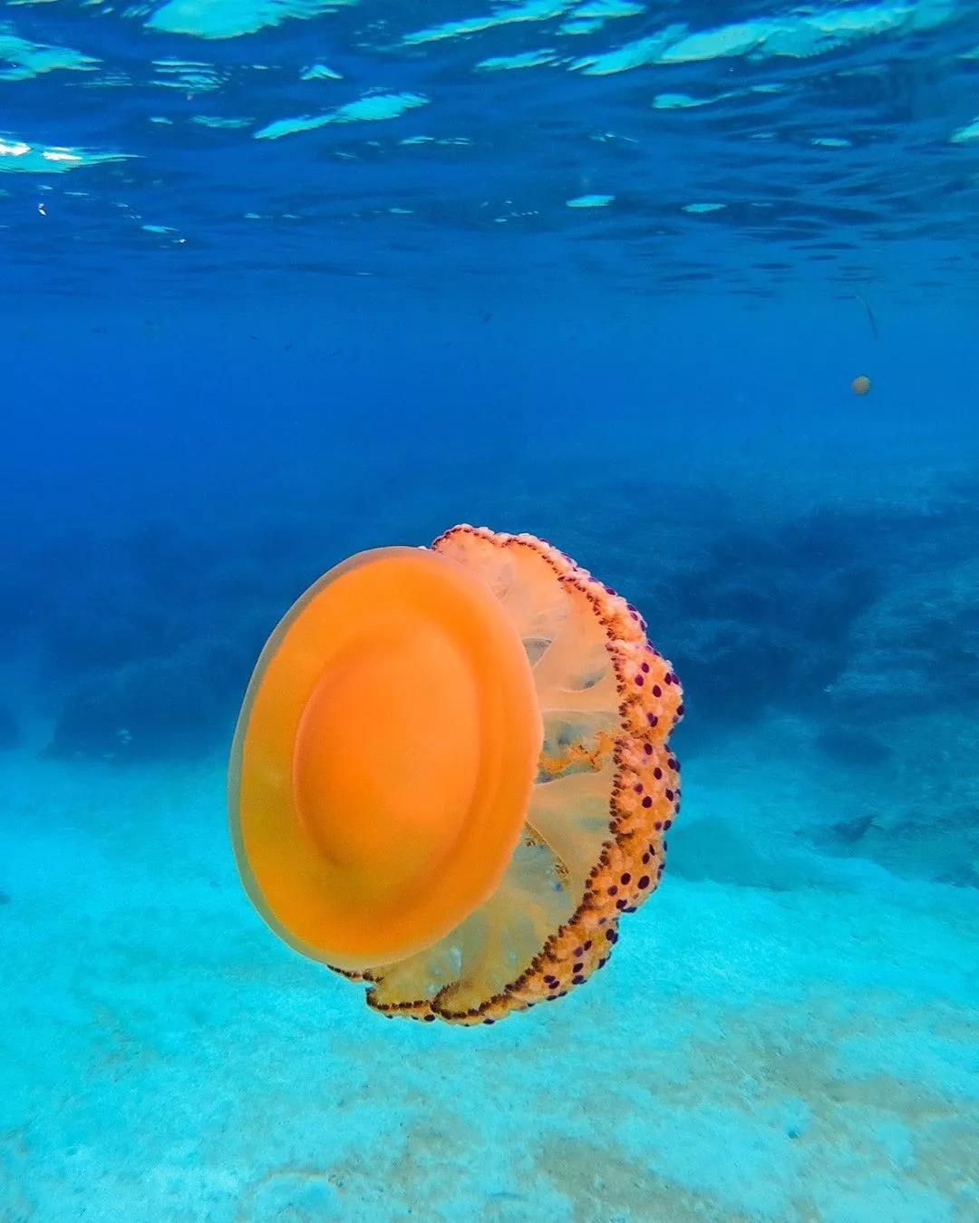 神奇海洋生物|最美味的居然是TA